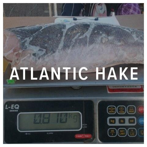 atlantic hake