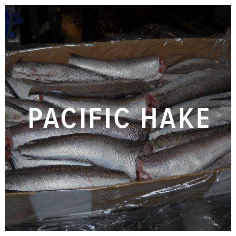pacific hake