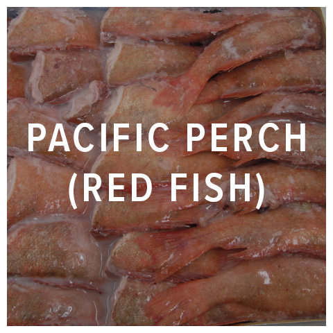 pacific perch red fish