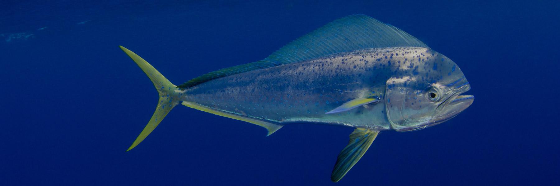 Seafood Distributors