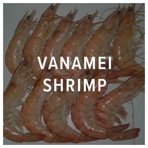 vanamei shrimp
