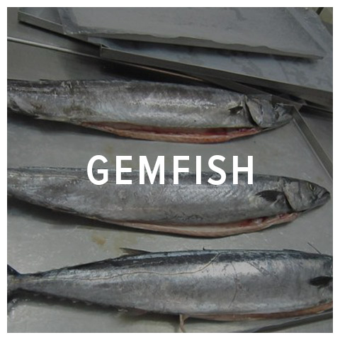 gemfish