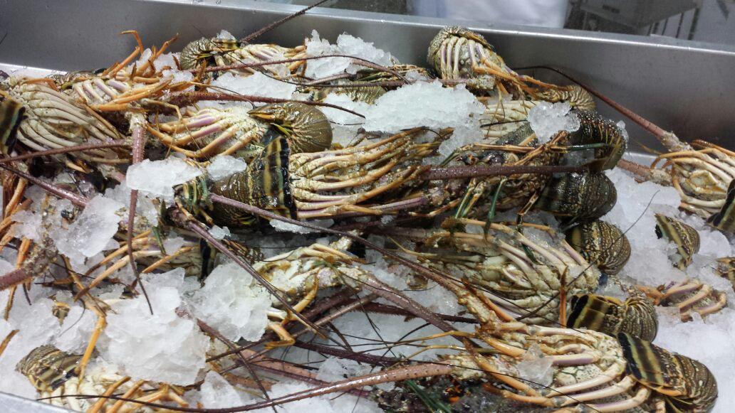 frozen lobster distributor
