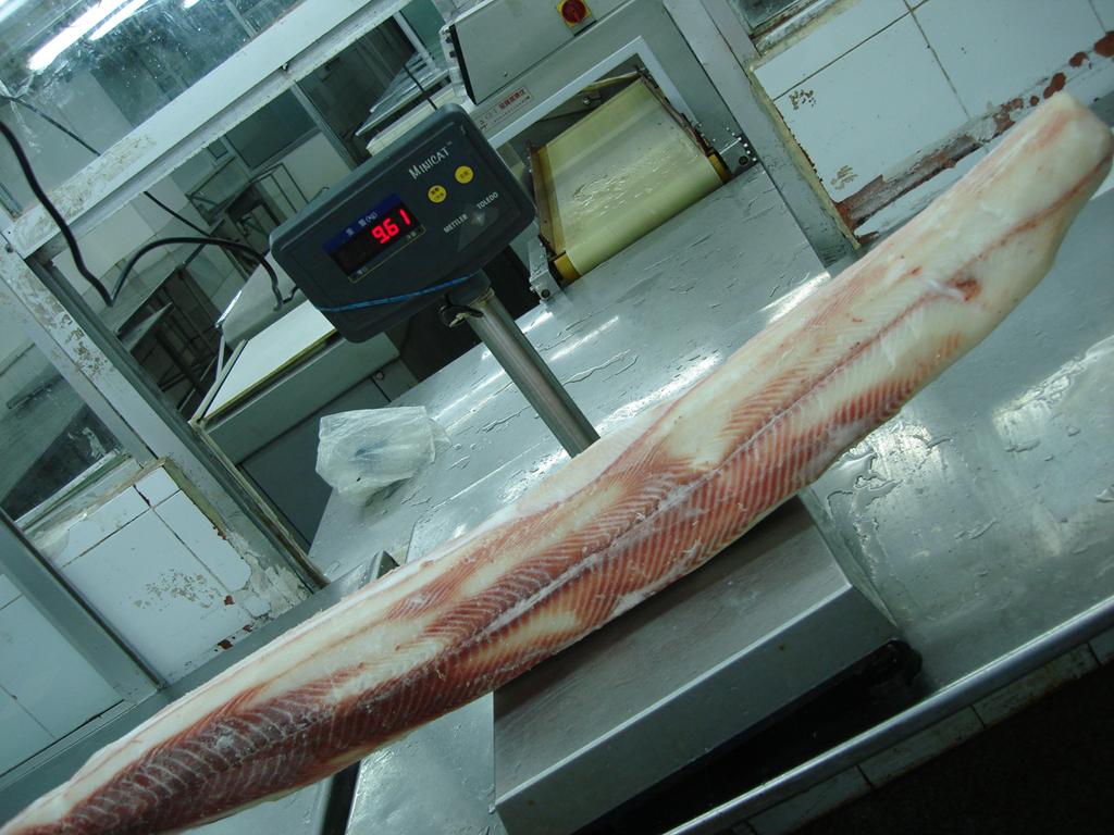 frozen Blue Shark fillets