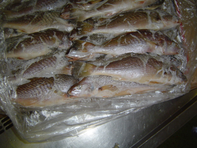 Yellow Croaker fillets