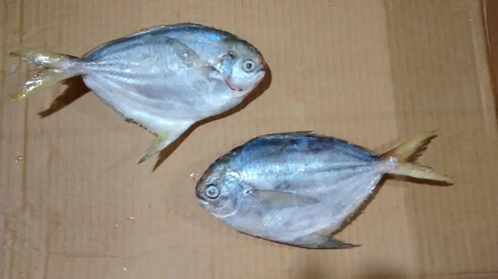 Butterfish fillet