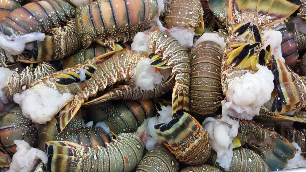 frozen lobster tails for sale