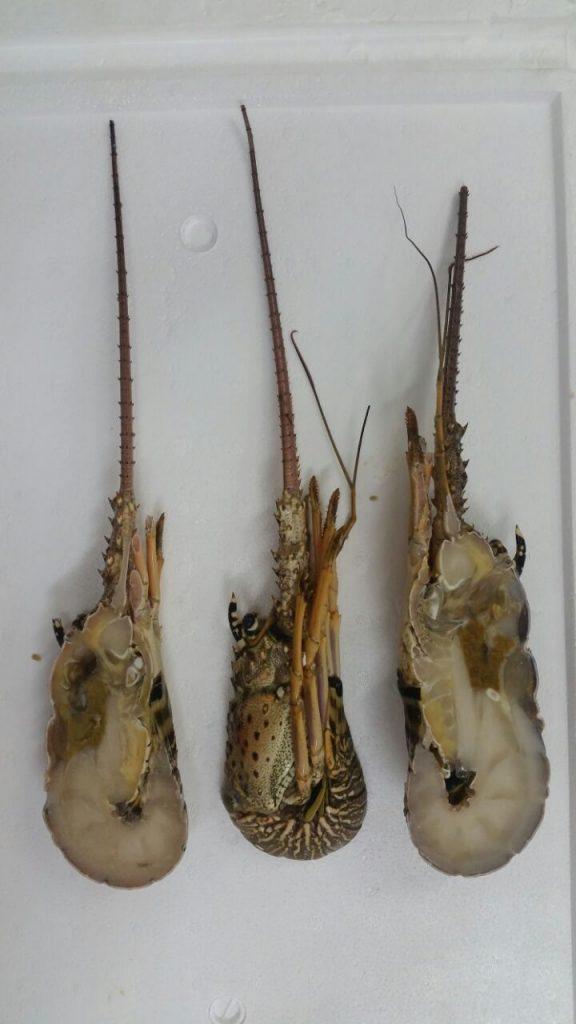 frozen Lobster halves