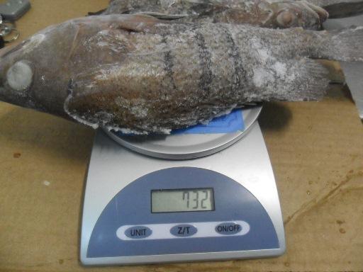 quality frozen Argentinian Grouper