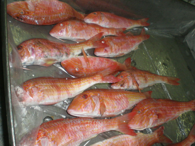 red mullet fish frozen