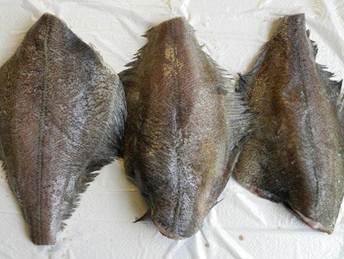 Flounder fillets