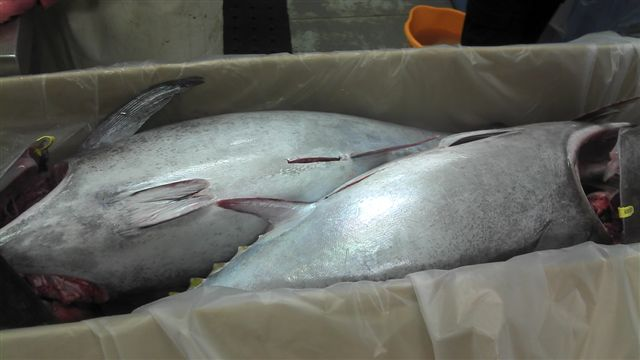 frozen Bluefin Tuna