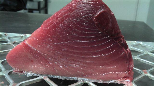 Bluefin Tuna fillet