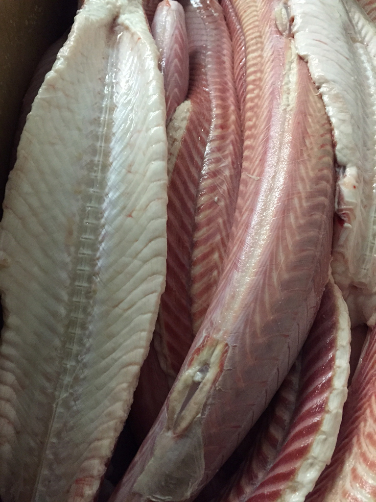 Dogfish fillets