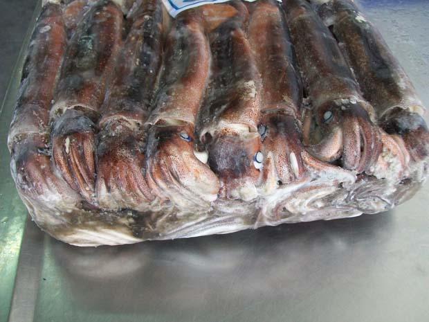 frozen Illex Squid on ice