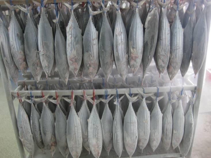 frozen Skipjack Tuna fillets