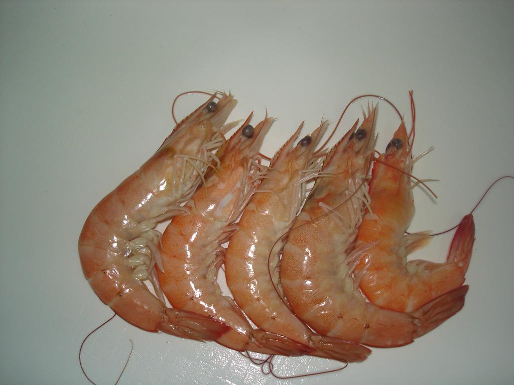 5 Vanamei Shrimp