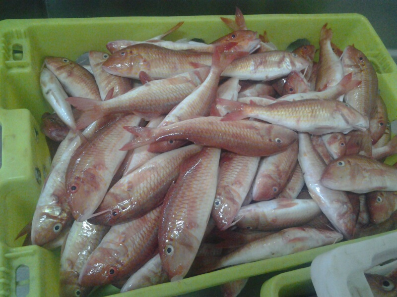 frozen red mullet fish